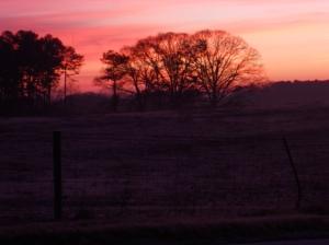 Dacula sunrise