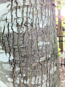 Lines in the Bark