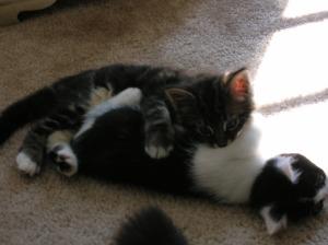 Kitten Romp
