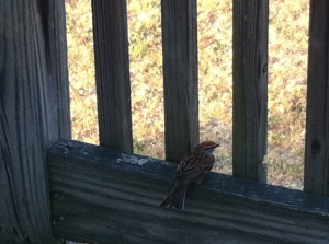 Bird on the deck